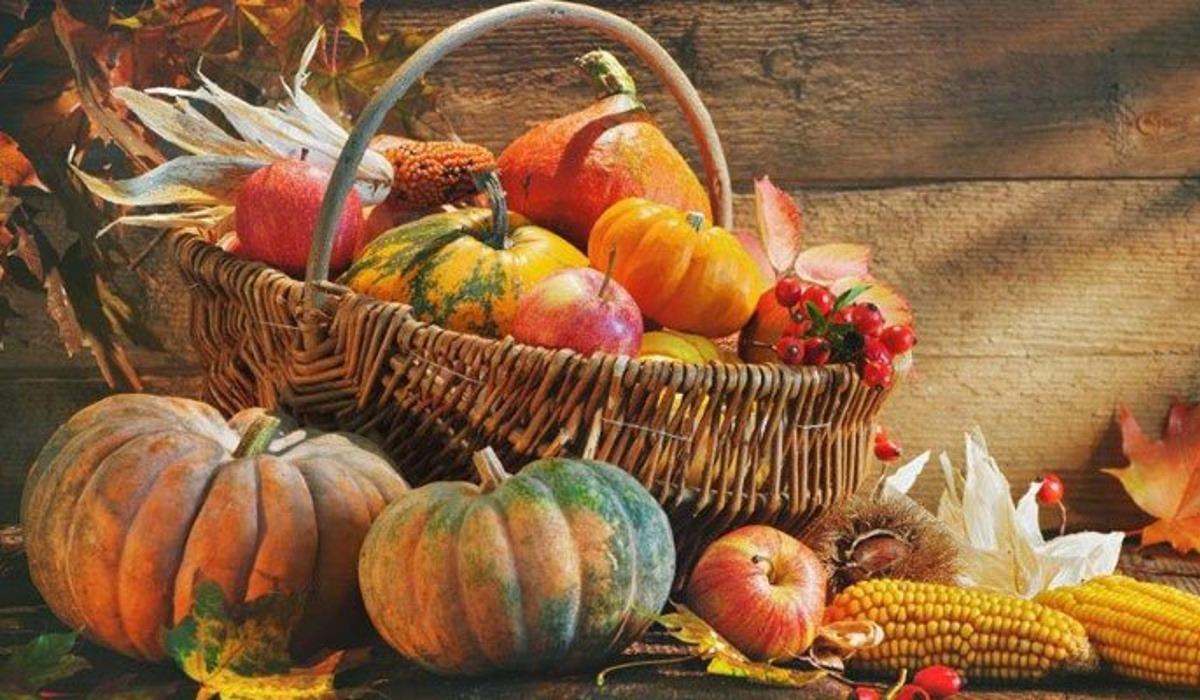 Assortment of pumpkins on fall background